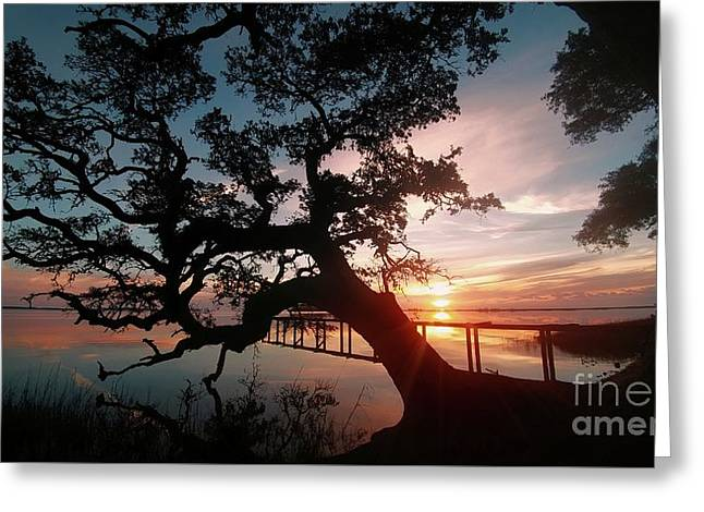 Greeting Card featuring the photograph Live Oak Sunrise by Benanne Stiens