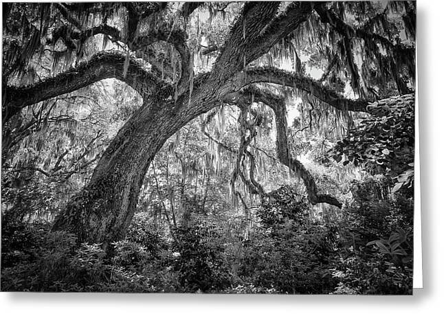 Live Oak Greeting Card