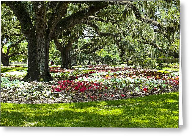 Greeting Card featuring the photograph Live Oaks At Brookgreen Gardens by Bill Barber