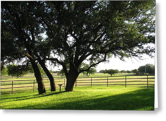 Live Oaks At Sunset Greeting Card by Shawn Hughes