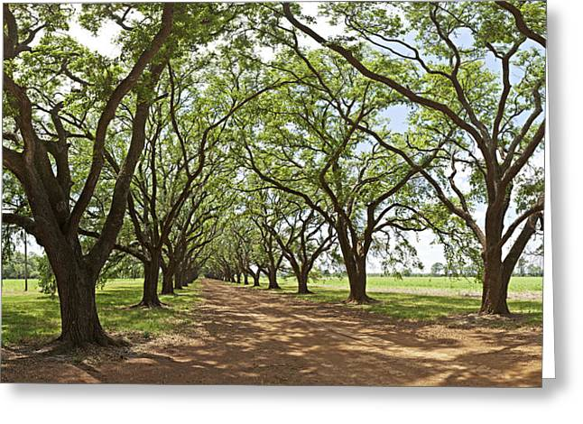 Live Oaks Country Road Greeting Card