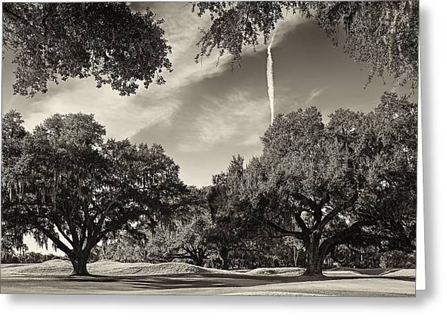 Live Oaks Greeting Card by Phill Doherty
