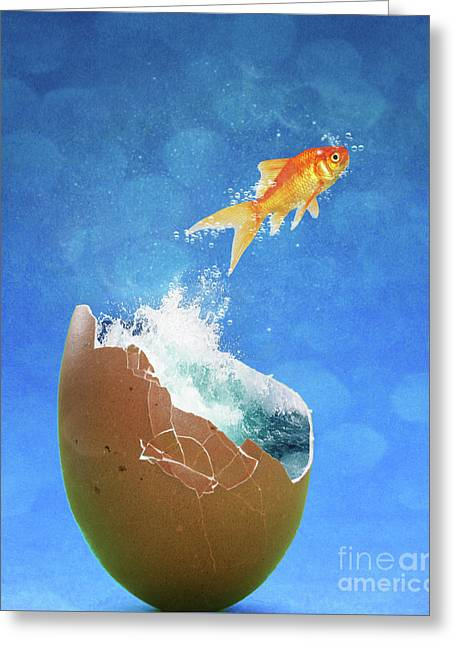Live Your Dreams Greeting Card by Juli Scalzi
