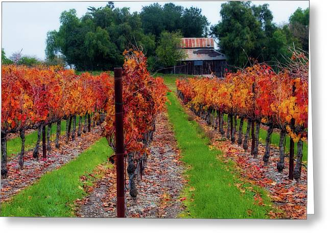 Livermore Vineyard Greeting Card