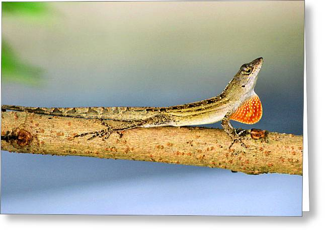 Lizard Looking For Love Greeting Card by Kristin Elmquist