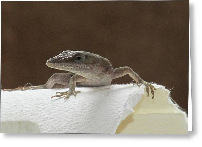 Lizard Greeting Card by Michele Caporaso