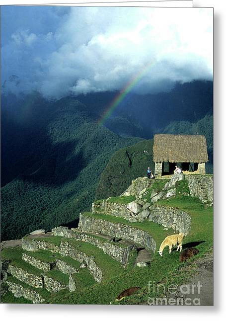 Llama And Rainbow At Machu Picchu Greeting Card