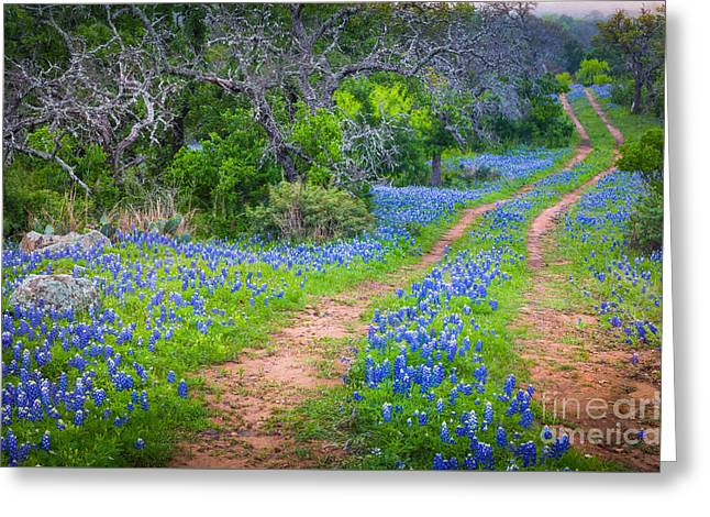 Llano Bluebonnet Ruts Greeting Card