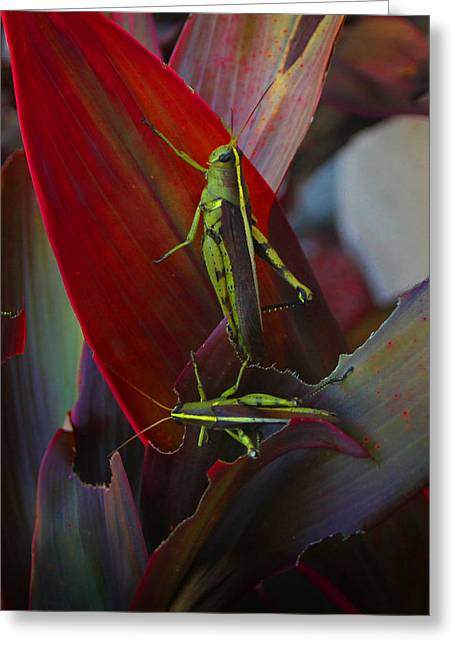 Local Locust Munching Greeting Card by Joseph G Holland