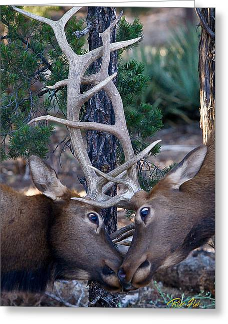 Locking Horns - Well Antlers Greeting Card