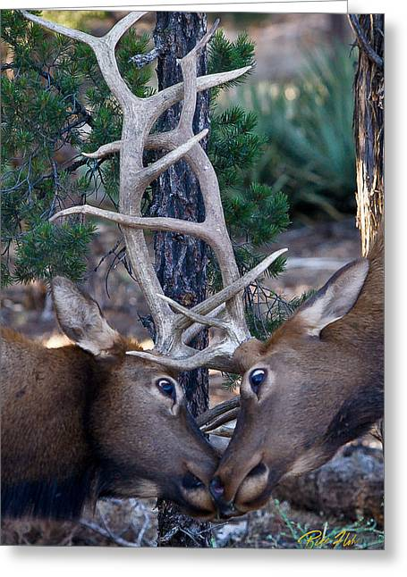 Locking Horns - Well Antlers Greeting Card by Rikk Flohr