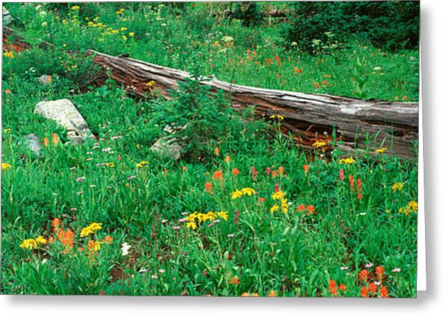 Log Amid Alpine Flowers, Ouray, Colorado Greeting Card by Panoramic Images