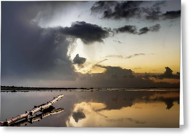 Log Pointing To Sunset Greeting Card by Greg Nyquist