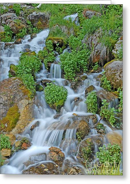 Logan Canyon Cascade Greeting Card by Dennis Hammer