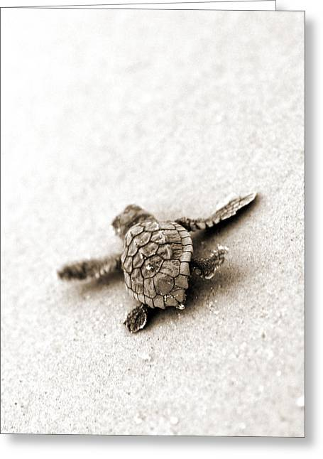 Loggerhead Greeting Card by Michael Stothard