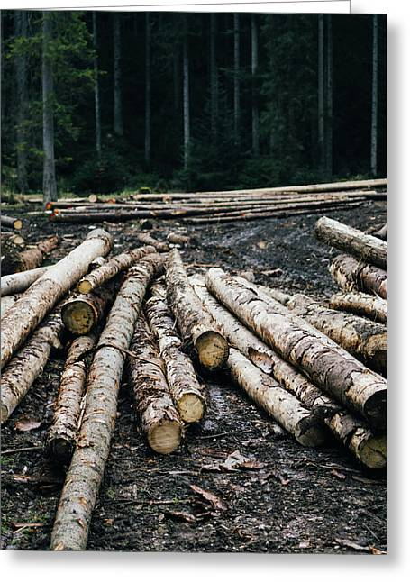 Logs In The Forest Greeting Card by Pati Photography