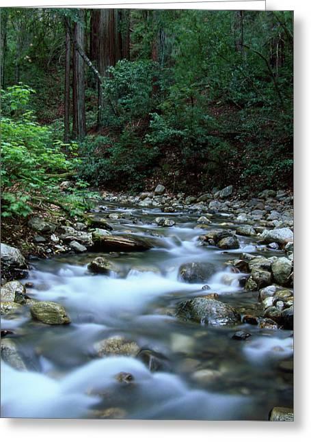 Logwood Creek - Ventana Wilderness Greeting Card