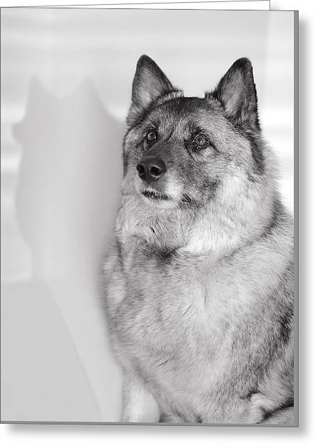 Greeting Card featuring the photograph Loki Bw by Irina ArchAngelSkaya