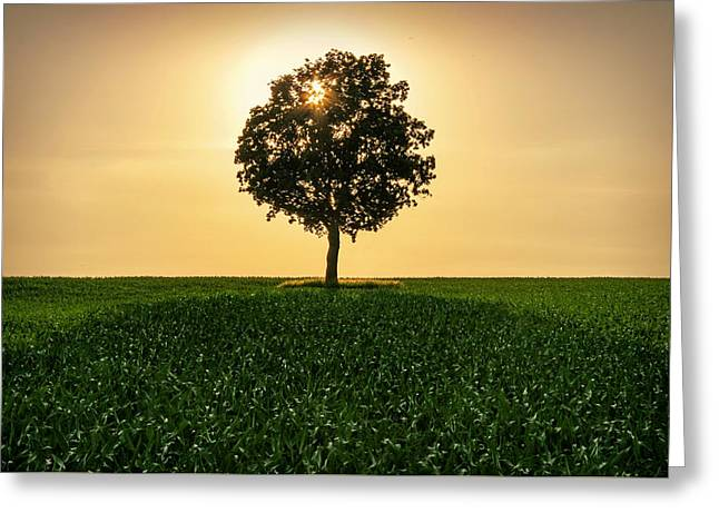 Lone Backlit Tree Greeting Card