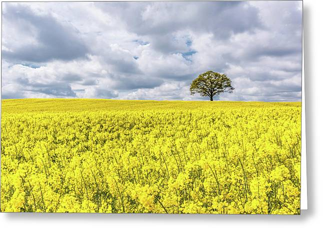 Greeting Card featuring the photograph Lone Beauty by Nick Bywater