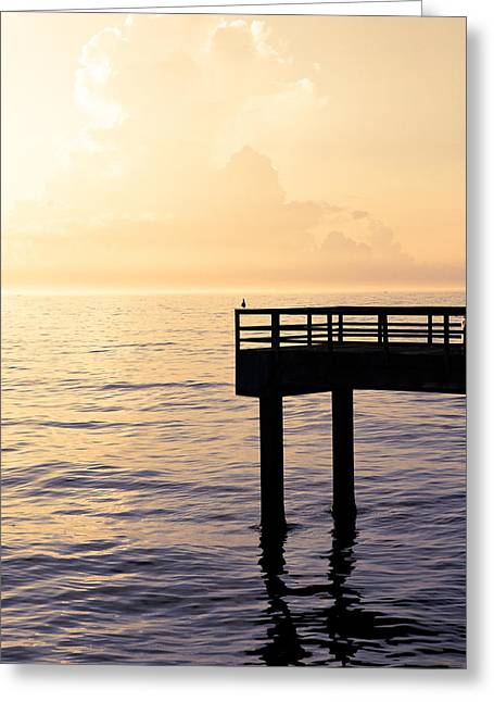 Lone Bird At Morning Greeting Card by Marilyn Hunt