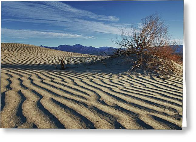 Lone Bush Death Valley Hdr Greeting Card by James Hammond