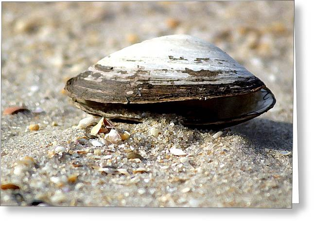 Lone Clam Greeting Card by Mary Haber