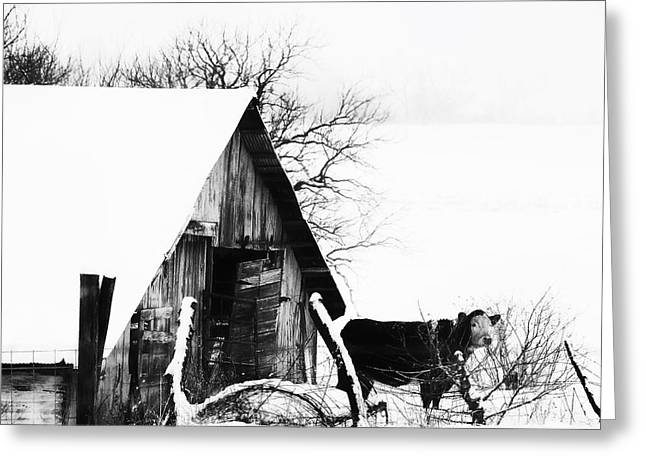 Lone Cow In Snowstorm Greeting Card