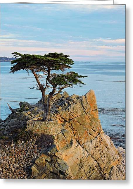 Lone Cypress Greeting Card by Connor Beekman