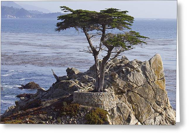 Lone Cypress Greeting Card by Elvira Butler