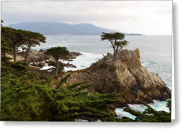 Lone Cypress Large Greeting Card by Barbara Snyder