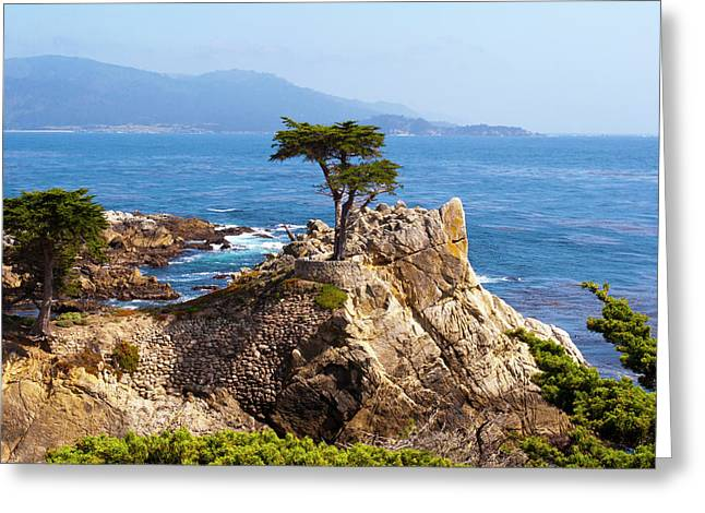 Lone Cypress Greeting Card by Lou Ford