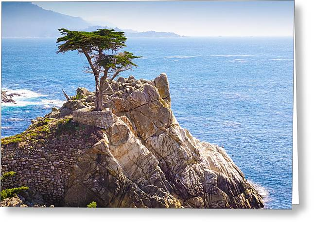 Lone Cypress Greeting Card by Lutz Baar