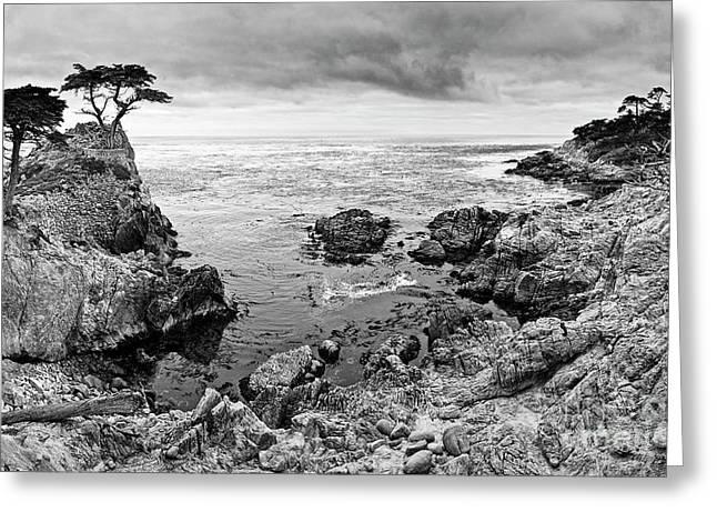 Lone Cypress Panorama Greeting Card