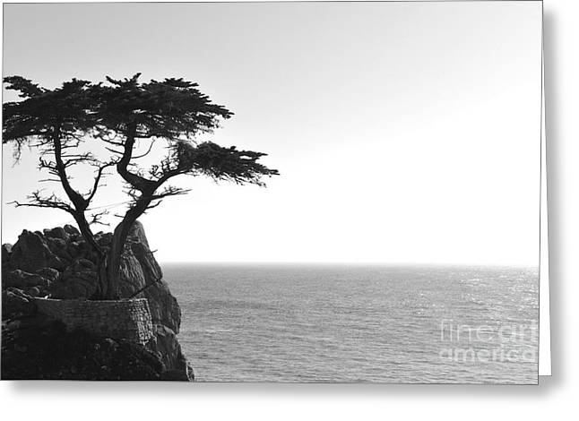Lone Cypress Greeting Card