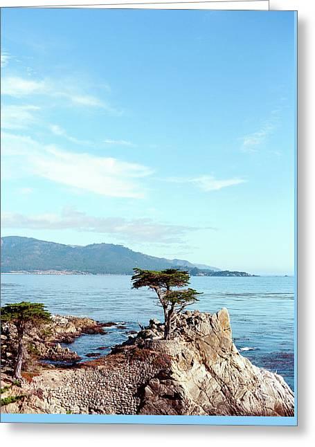 Lone Cypress Tree In Carmel 2 Greeting Card by Ariane Moshayedi