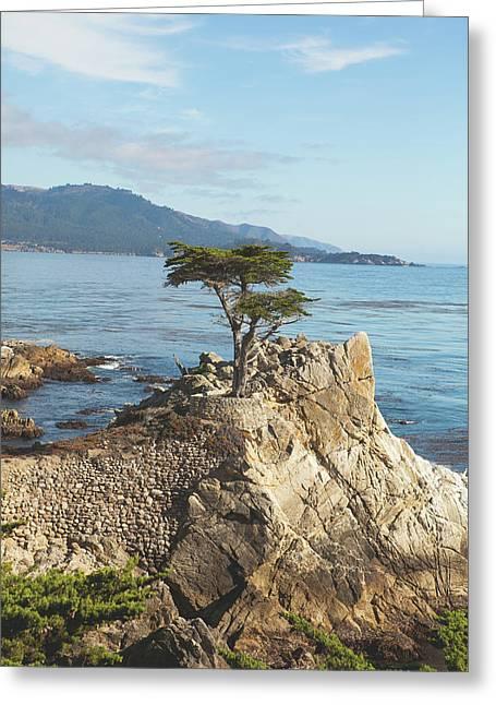 Lone Cypress Tree In Carmel 3 Greeting Card by Ariane Moshayedi