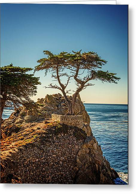 Lone Cypress Tree Greeting Card by James Hammond