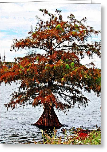 Lone Cypress Tree Greeting Card