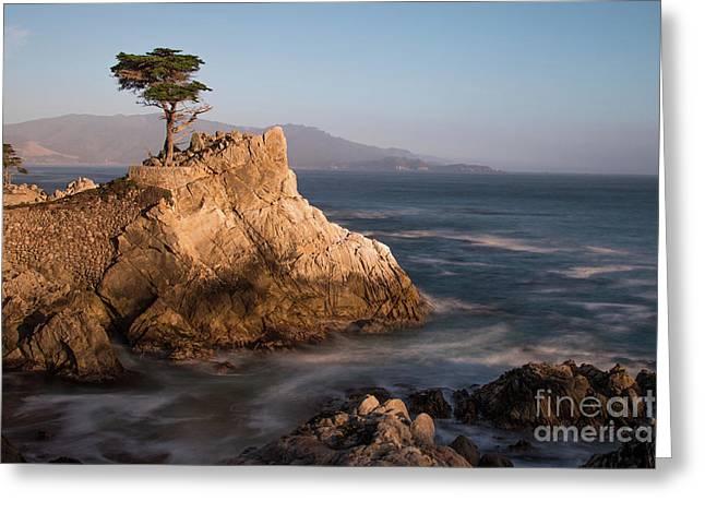 lone Cypress Tree Greeting Card