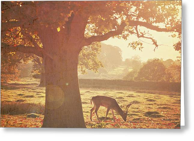 Greeting Card featuring the photograph Lone Deer by Lyn Randle