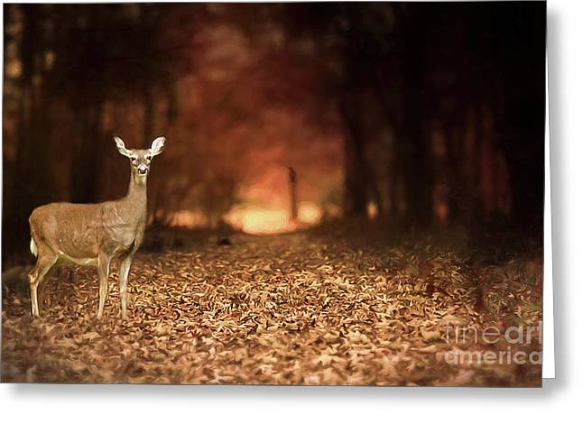 Greeting Card featuring the photograph Lone Doe by Darren Fisher