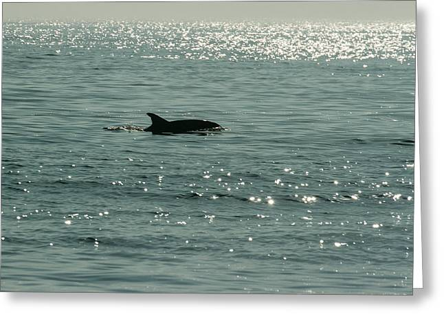 Lone Dolphin Greeting Card by Allan Levin