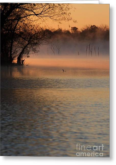 Lone Duck At Sunrise Greeting Card