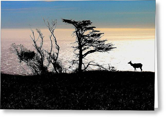 Tule Elks Greeting Cards - Lone Elk of Tomales Bay Greeting Card by Wingsdomain Art and Photography