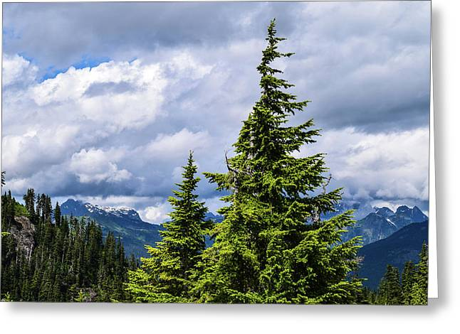 Lone Fir With Clouds Greeting Card