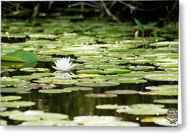 Lone Flower On Lake Greeting Card