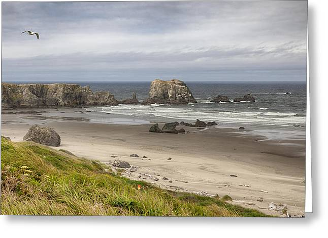 Lone Gull - Bandon Beach Greeting Card