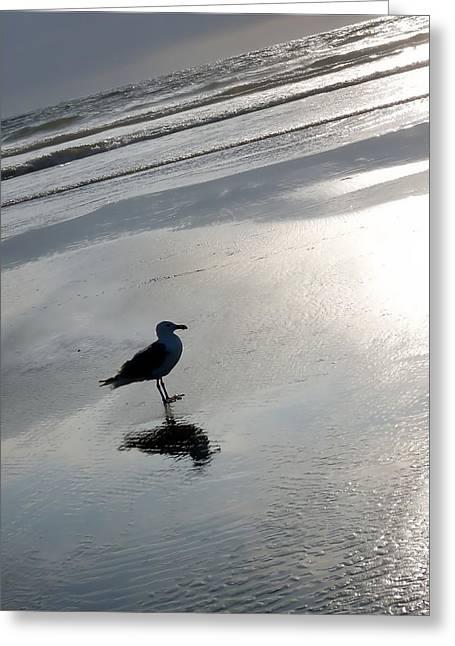 Lone Gull Greeting Card by John Winner