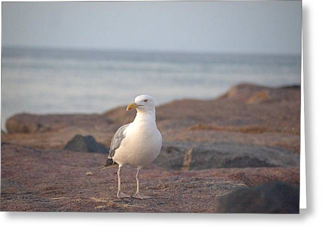 Greeting Card featuring the photograph Lone Gull by  Newwwman
